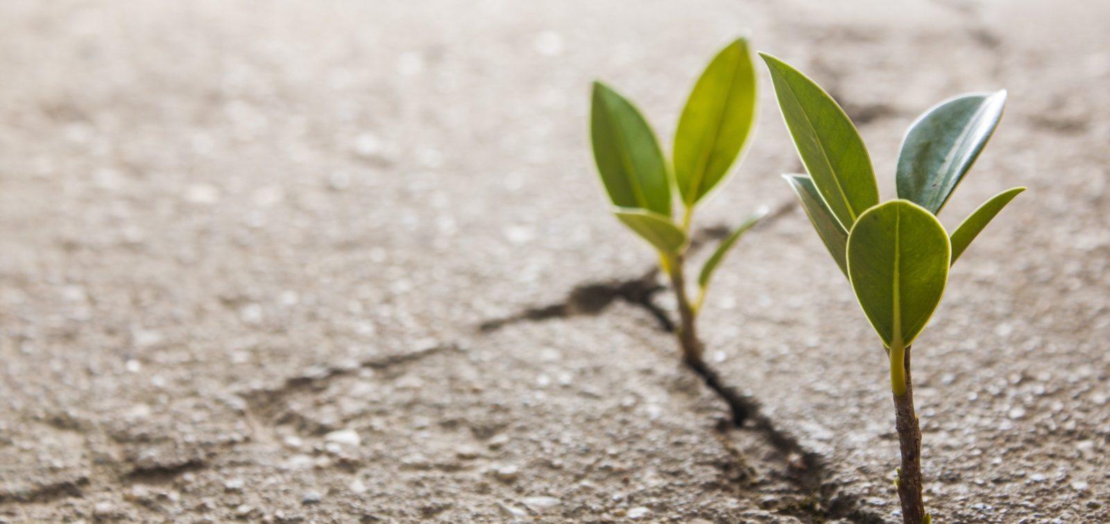 Life-Ministries-Plant-Concrete